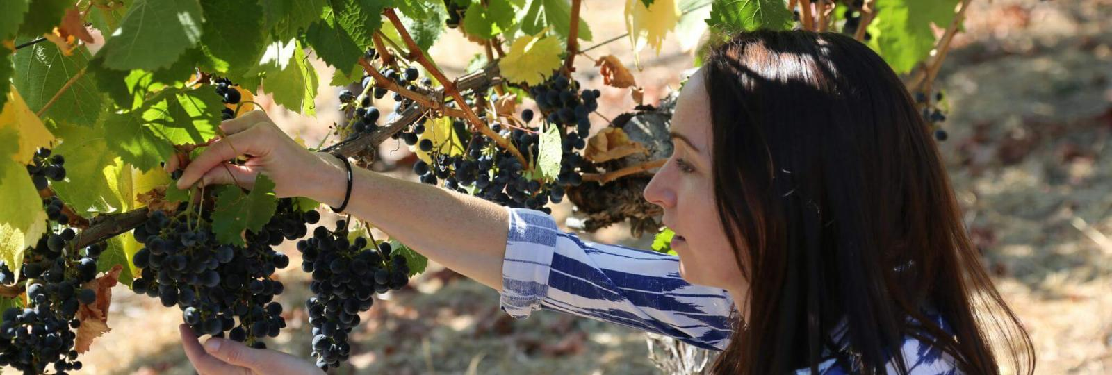 Kristina in the vineyard