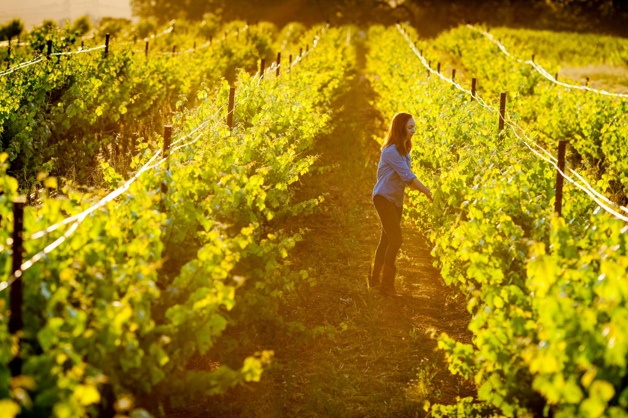 Kristina in the Vineyard - Dry Farming
