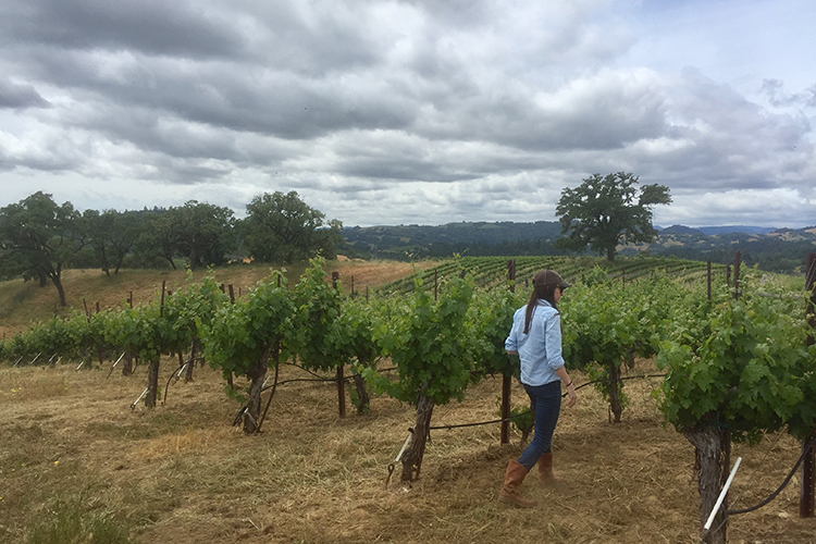 Kristina Shideler Walking Knights Valley Vineyards