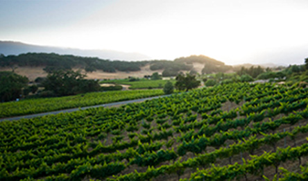Arrowood Estate Vineyard